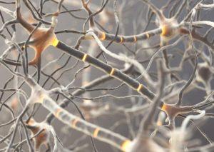 شبکه نورونی