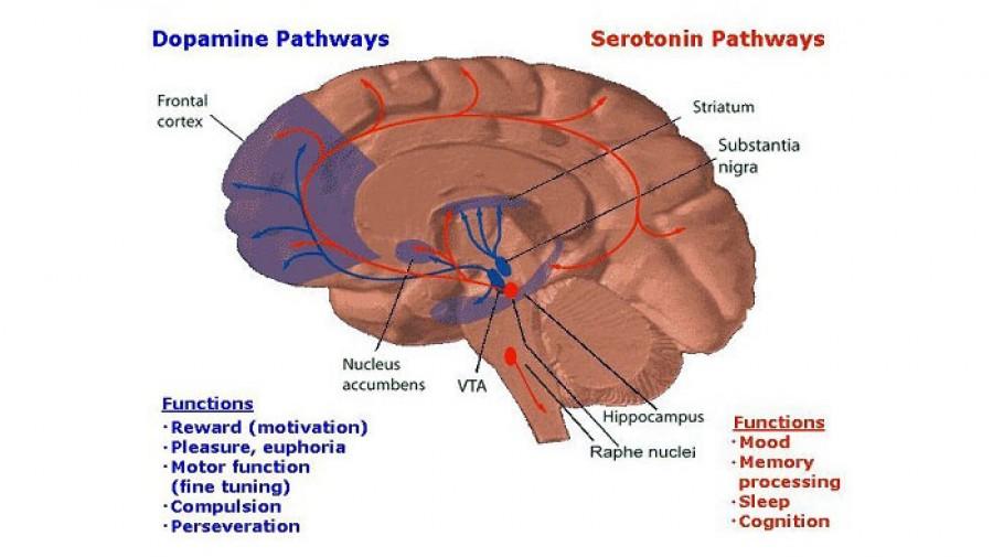 Dopamine دوپامین