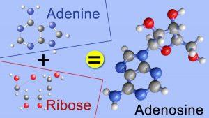 آدنوزین Adenosine
